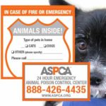 "Free safety pack ""Animals INSIDE!"""