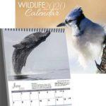 Free 2020 Canadian Wildlife Calendar